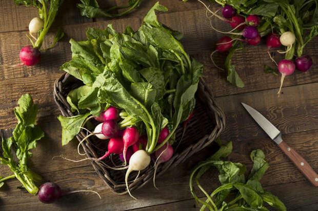 Редис из теплицы и первая весенняя зелень, и первые натуральные витамины
