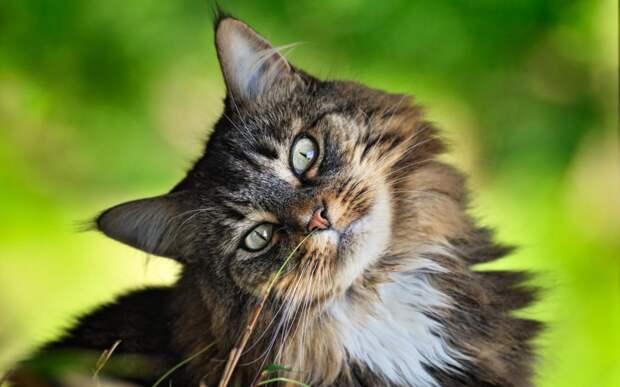 Мамина кошка упорно изображала из себя больную, хотя лапа у нее давно уже прошла
