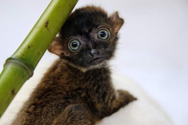 Малыши-милашки из дикой природы, которые заставят вас улыбнуться