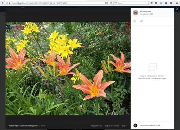 Фото дня: цветы во дворах восхитили жителей Южного Медведкова