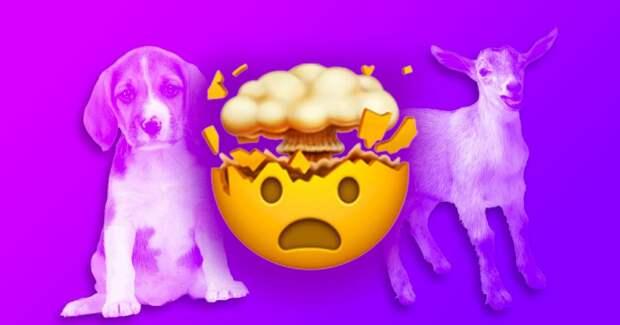 Весь мир опять гадает кто на фото: пёс или козёл?