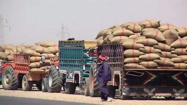 Россия поставляет в Сирию продовольственное зерно