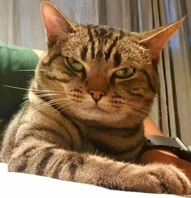 Парень установил скрытую камеру, чтобы увидеть, что делает его кошка, пока он спит