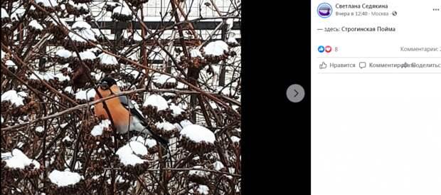 Фото дня: оранжевая птица счастья в Строгине