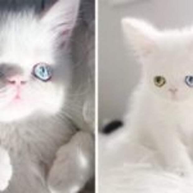 Красавица-кошка с космическими глазами покоряет соцсети