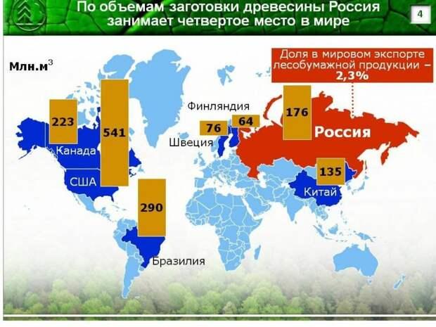 Россия занимает четвертое место в мире по объемам заготовки древесины