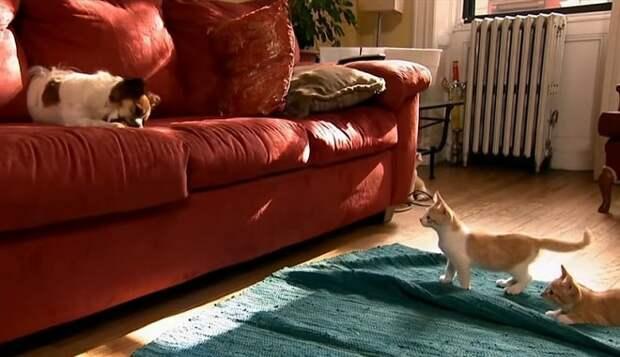 Котенок и диван