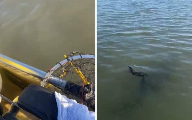 Американец пошел на рыбалку, но вместо рыбы поймал более крупное существо