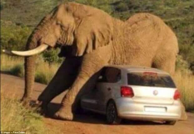 Снимок сделан в южноафриканском национальном парке Пиланесбург. Слону захотелось обо что-то почесаться и он выбрал для этой цели машину животные, люди и животные, неудачные моменты, туристы, фейлы