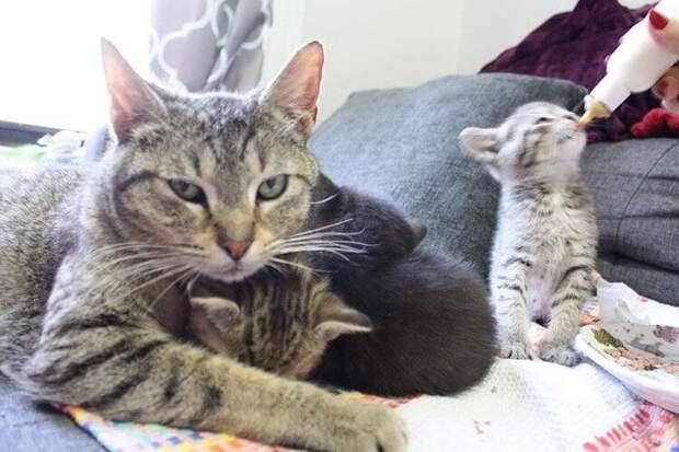 От отчаяния беременная кошка забрела в открытую дверь чужого дома история, история спасения, коты, котята, кошки, спасение животных, трогательно