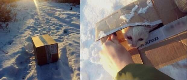 Под Волгоградом женщина спасла котенка из выброшенной на мороз коробки