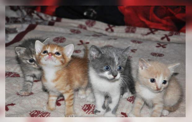 Приучила котят к лотку, но теперь они туда без меня не ходят