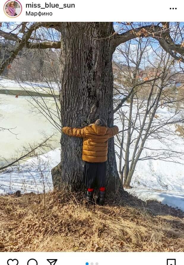 Фото дня: в Марфине устроили «обнимашки» с деревьями