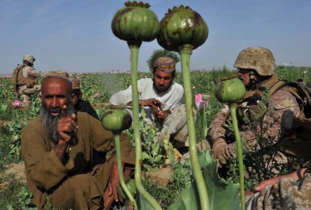 Американская оккупация обернулась резким ростом производства наркотиков и наркотрафика в Афганистане