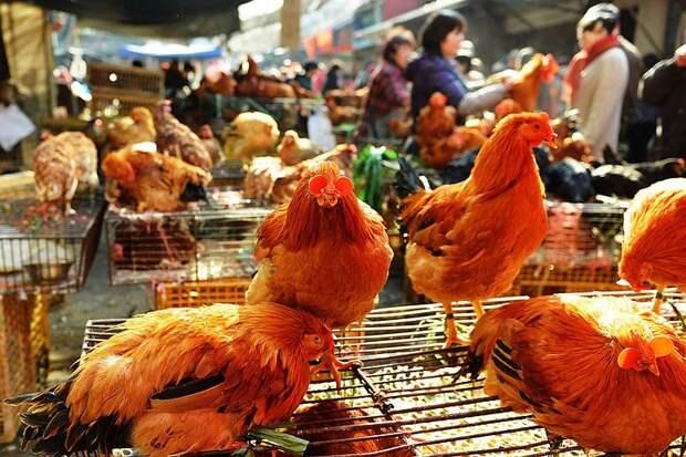 В Китае впервые человек заболел вирусом птичьего гриппа H10N3. Эксперт объяснил нужно ли этого опасаться