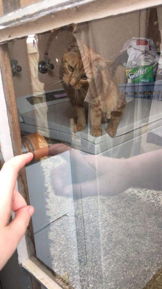 Ручка входной двери сломалась и девушка не могла войти в дом. Но на помощь хозяйке пришла кошка
