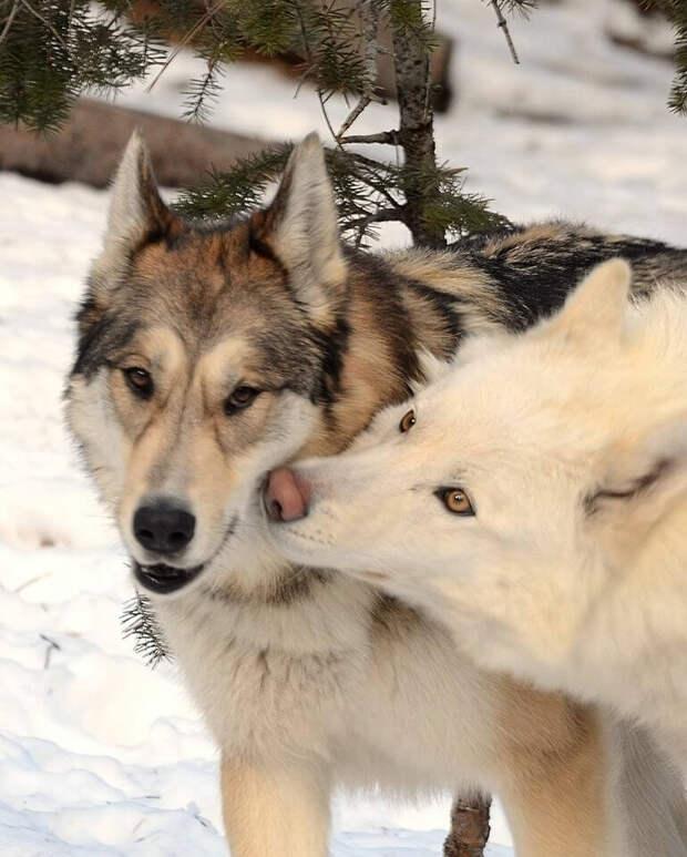Она думала, что купила просто необычного щенка… Но вскоре выяснилось, что это совсем не собака!