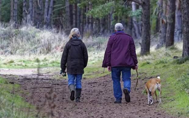 В РФ запретят выгул собак в нетрезвом виде