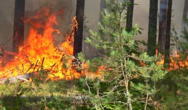 Водном израйонов Оренбуржья МЧС прогнозирует пятый класс пожарной опасности