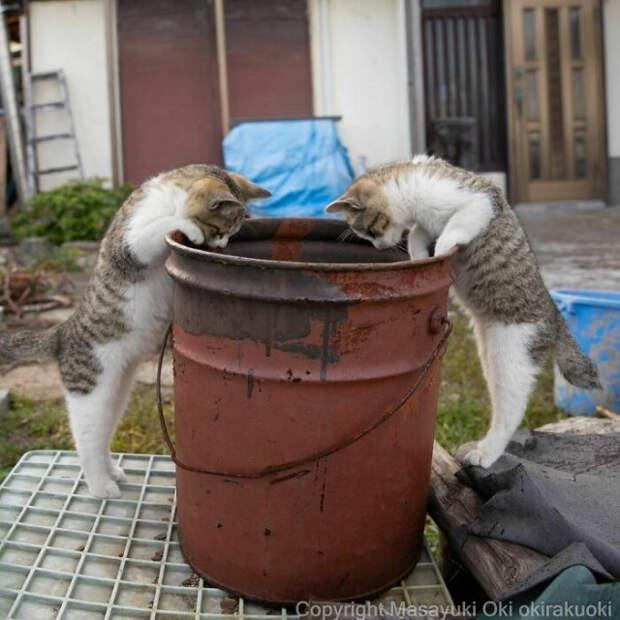 Уличные кошки Токио в фотографиях Масаюки Оки, от которых невозможно оторваться