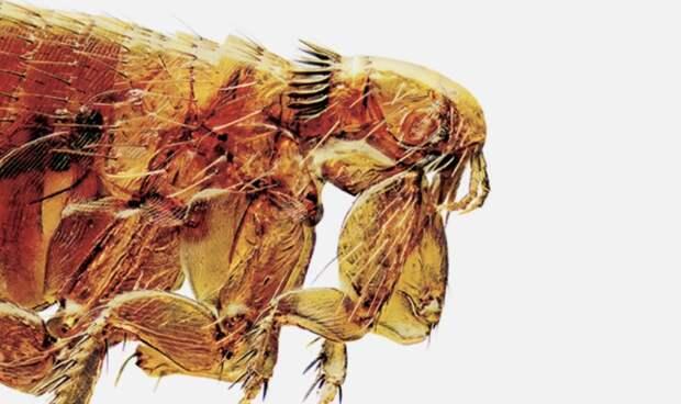 Окопные болезни 20-го века — истинный враг., изображение №22