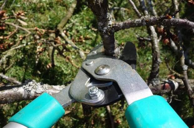 Сотрудники «Жилищника» провели санитарную обрезку деревьев на Петрозаводской