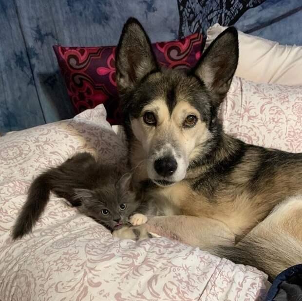 Котенок лежит возле собаки