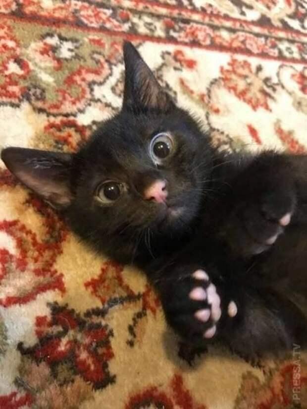 Веселые и забавные черные коты