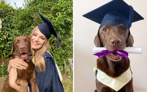 Семья устроила выпускной для пса, чтобы он не чувствовал себя обделенным