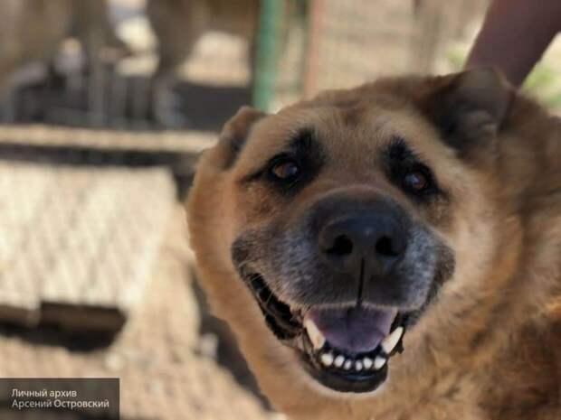 Ученые доказали, что собаки могут определить коронавирус по запаху