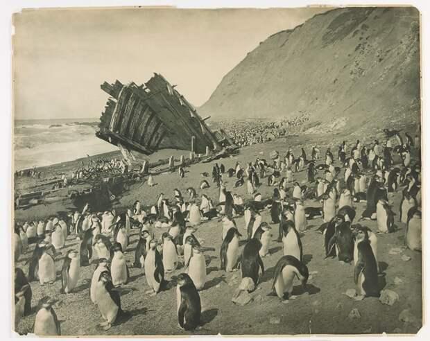 Разбитое промысловое судно на пляже о. Маккуори, 1911 год Австралийская антарктическая экспедиция, антарктида, исследование, мир, путешествие, фотография, экспедиция