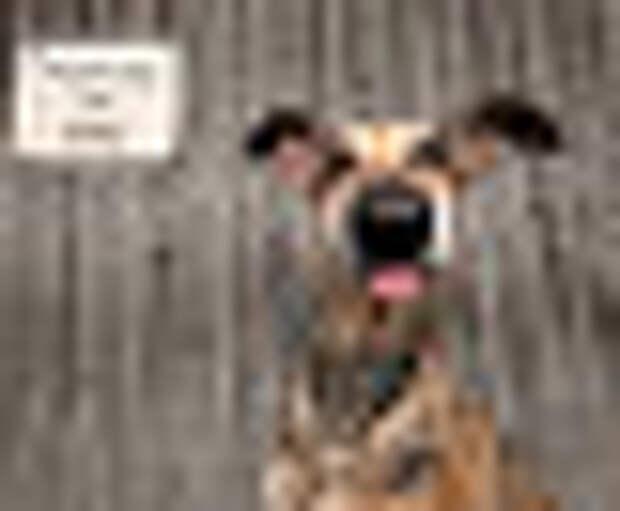Mars Petcare Comedy Pet Photo Awards (Великобритания): самые смешные фотографии домашних питомцев 2020