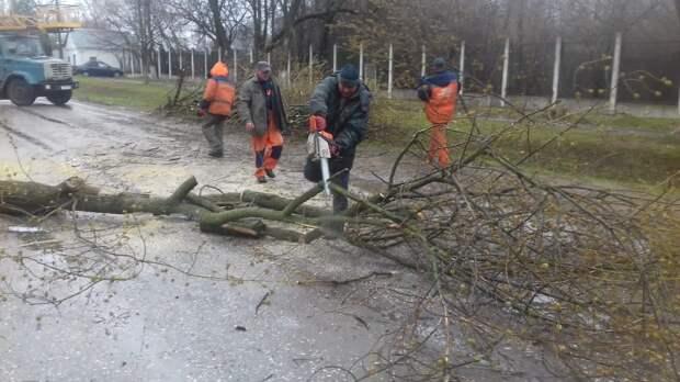 Упавшее на улице Белякова дерево распилили