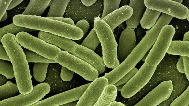 Ученые из Финляндии обнаружили новый способ определить продолжительность жизни человека