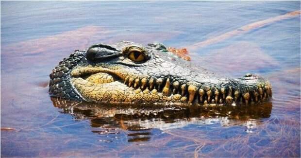 Розыгрыш отдыхающих с помощью головы аллигатора