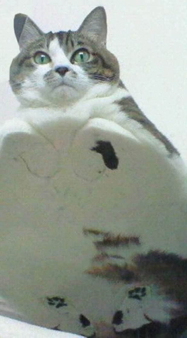 Просто огромный мяф котики, коты, милота, мотики, сквозь стекло