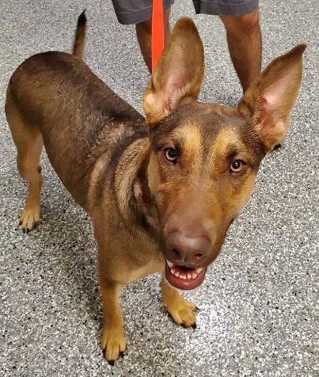 Хозяин оставил собаку с запиской на шее и надеждой на лучшее будущее для нее