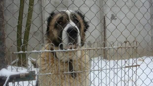 «Стреляем по крысам…» ШОК! Живодёры расстреливают приют для бездомных собак под Киевом! Правоохранительные органы умывают руки…