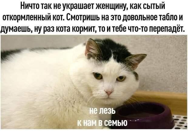 Возможно, это изображение (1 человек, кот и текст «ничто так не украшает женщину, как сытый откормленный кот. смотришь на это довольное табло и думаешь, ну раз кота кормит, TO и тебе что-то перепадёт. не лезь K нам Ð семью H»)