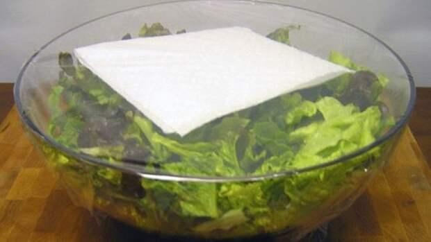 9. Хранение салата-латука еда, овощи и фрукты, продукты, советы, храним правильно