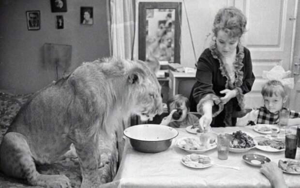 Как сложилась судьба семьи, которая держала в квартире львов: история с трагическим концом