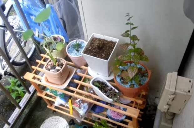 На крошечном балконе девушка не только хранит нужные вещи, но и устроила живой уголок. | Фото: youtube.com.