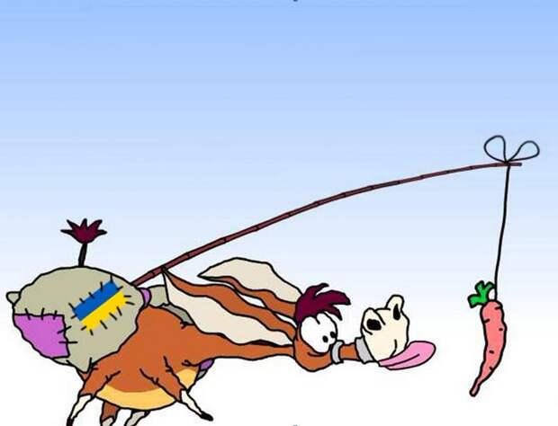 Перед ослами снова помахали морковкой