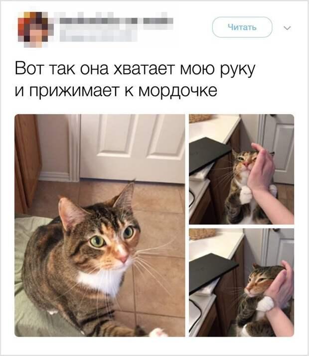 Нежность и обожание гифки, коты, фото