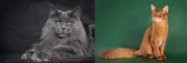 Коты модели
