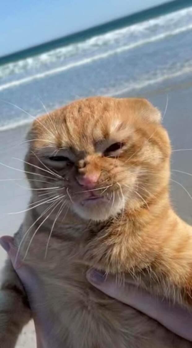 Кот Тыква завоевал популярность благодаря тому, что ненавидит морской ветер.