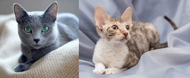 Лежачие коты