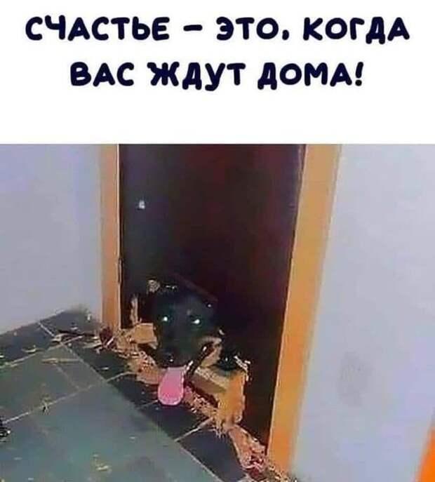 Возможно, это изображение (собака и текст «счастье это, когда вас ждут дома!»)