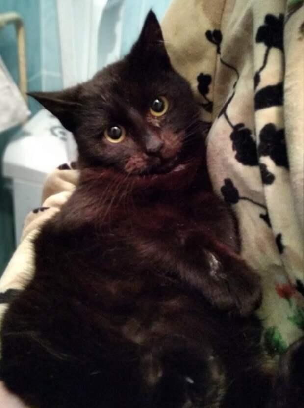 Сейчас котик в тепле, но это ненадолго, к сожалению, ему совсем некуда идти...