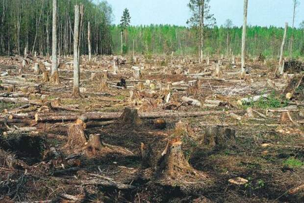 """Нашествие китайских """"лесозаготовителей"""" в томские леса становится серьезной политической проблемой"""